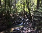 Ramsey_Canyon_-_Sierra_Vista_-_AZ_-_2015-10-01at12-01-191__22067507569_.jpg
