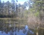 Jones_State_Forest.jpg