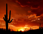 Saguaro_Sunset.jpg