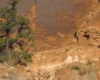 Petroglyphs__Potash_Road__near_Moab__Utah.jpg