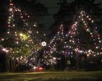 Christmas_Tree_Lane.jpg