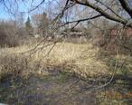 Oak_Hollow_Conservation_area_of_Schaumburg__Illinois.JPG
