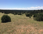 Pinyon-juniper_woodland__Arizona.jpg