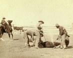 Cattle_branding__Grabill_1888_.jpg