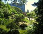 Japanese_Tea_Garden__San_Mateo__CA_-_IMG_9126.JPG