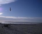 Coronadobeach2009.jpg