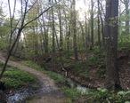 Pathway_in_Ravine_Park__Lake_Bluff.jpg