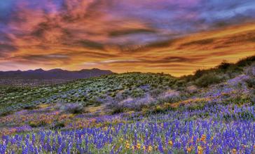 San_Carlos_wildflowers__2010.jpg