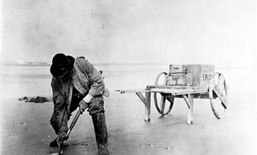 Digging_razor_clams_on_the_beach_near_Copalis__Washington__1915__COBB_23_.jpeg