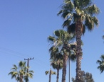 West_Hollywood__CA__USA_-_panoramio__4___cropped_.jpg