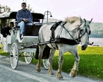 Horse_and_carriage-Duluth-2006.jpg
