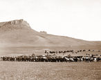 Cattle_Roundup__Great_Falls__MT__Geo_B_Bonnell__c1890.jpg