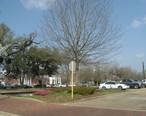 Hammond__Louisiana.jpg