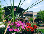 Pullman_Square_Flowers_and_Fountain.jpg