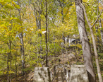 Jardín_Botánico_Jerry_E._Clegg__Lafayette__Indiana__Estados_Unidos__2012-10-15__DD_08.jpg