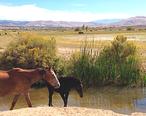 Steamboat_Springs_Nevada.jpg