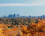 USA_Massachusetts_Boston_Foliage.jpg