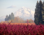 Mt._Hood__Oregon__Clackamas_County.jpg