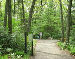 Garden_in_the_Woods_-_IMG_2451.JPG