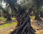 Corning_Sevi_Tree_Aug15.jpg