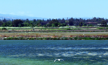 Shoreline_Park_Mountain_View_California_Salt_marsh_IMG_2445-12__cropped_.jpg