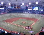 Tropicana_Field_Playing_Field_Opening_Day_2010.JPG