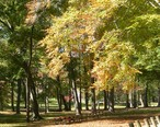 Central_Park_trees_Ashland_KY_Oct_2006.JPG