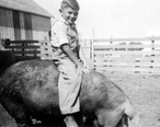 Iowa_Farm_Boy_riding_hog__1941.jpg