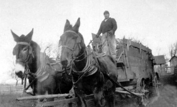 Marion_Cty__Iowa_Farmer_w_mule_drawn_wagon__1920s.jpg
