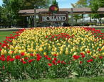 Holland_MI_Tulips_01.jpg