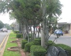 Downtown_Jonesboro__LA__along_the_Jimmie_Davis_Blvd_MVI_2684.jpg