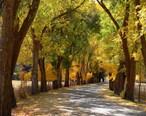 Abbey_Road_Fall_Leaves_HTA.jpg