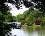 Missouri_Botanical_Garden_-_Seiwa-en.JPG