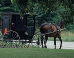 Amish_horse_and_buggy__MSA___5789077730_.jpg