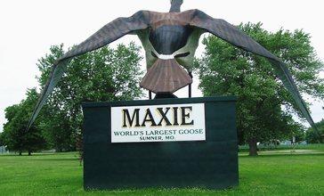 Maxie_the_goose_1.jpg