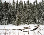 A087__Apache-Sitgreaves_National_Forest__Alpine__Arizona__USA__2004.jpg