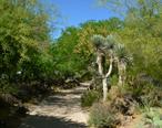 Ethel_M_Botanical_Cactus_Garden_3.jpg