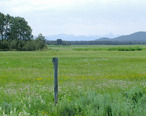 Meadow_in_Island_Park__Idaho.jpg