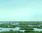 Salt_Marsh_Near_Galveston.jpg