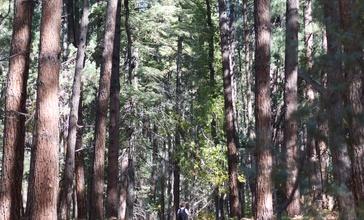 Trail_up_Pine_Canyon.jpg