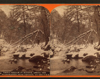 Trout_stream_in_winter__among_the_Alleghenies_near_Cresson__on_the_P._R._R__by_R._A._Bonine_2.jpg