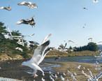 Morro_Bay_California_seagulls.jpg