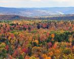 Vermont_fall_foliage_hogback_mountain.JPG