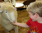 Kid_feeding_sheep.jpg