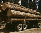 Truck_load_of_ponderosa_pine__Edward_Hines_Lumber_Co__operations_in_Malheur_National_Forest__Grant_County__Oregon__July_1942.jpg