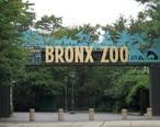 Stavenn_Bronx_Zoo_00.jpg