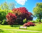 HighlandParkTrees.jpg