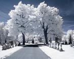 RocSnow_Infrared_Cemetery_Trees__17215478494_.jpg