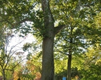 1812_Sycamore__Fairfield__CT_-_October_22__2012.jpg