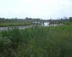 Bayonne_wetland_park_bridge_jeh.jpg